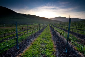 San Luis Obisbo wineries, California
