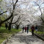 Springtime nature walk