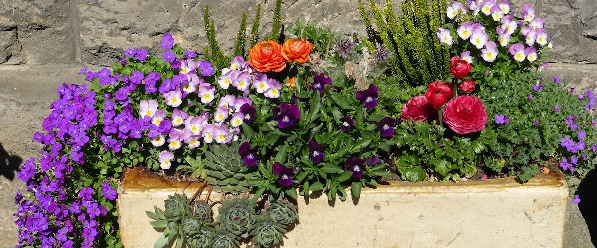 http://brazenwoman.com/gardening-diy-perfect-flowering-planter-for-beginners/