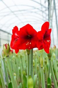 Brighten Up: Six Indoor Plants Your Black Thumb Can't Kill