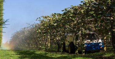 Brazen Loves: Zespri SunGold Kiwifruit
