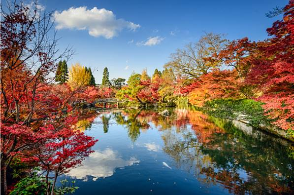 Colour Yourself Happy: The Top 9 Spots to Discover Fall
