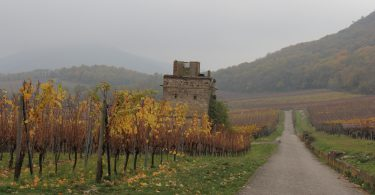 Strasbourg Wine Road, Alsace