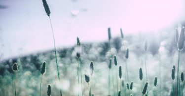 How to Beat Your Seasonal Allergies Before You Can't Breathe